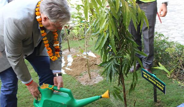 Manlift India Tree Plantation-David King